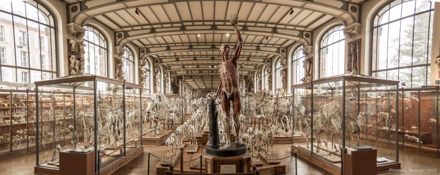 Paris, le Muséum, l'Origine delle specie e Edgar AllanPoe
