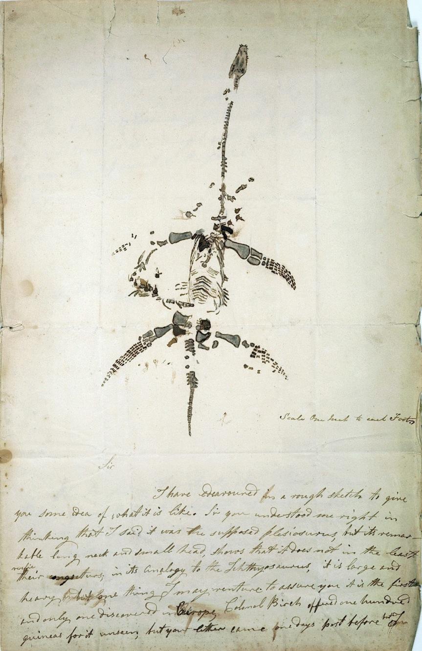 img_04(Mary_Anning_Plesiosaurus)